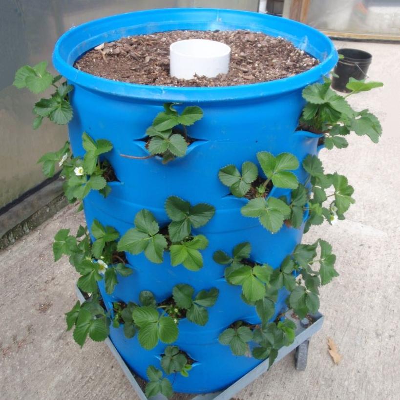 3-D Barrel Organic Gardening System Plans and DVD